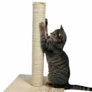 Cats: Rope for Scratching Posts